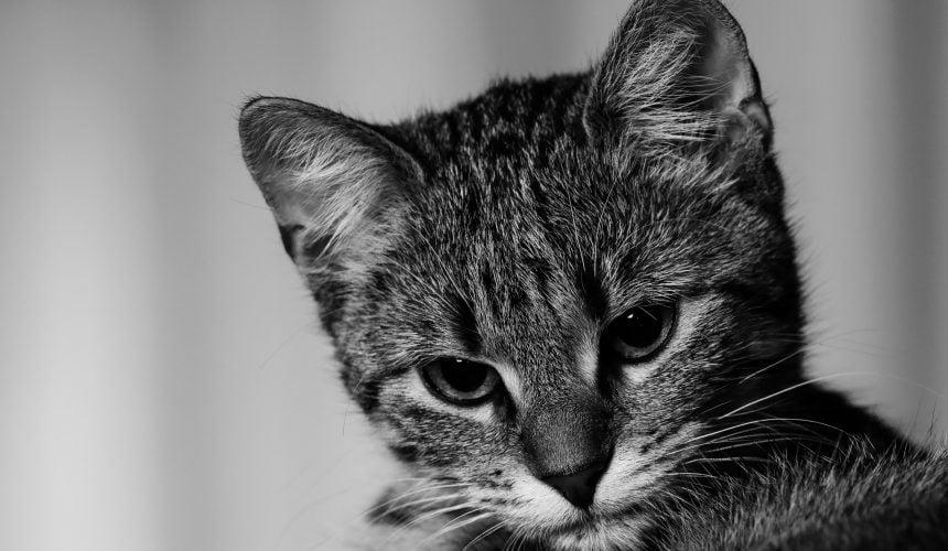 Szkolny boiskowy kot