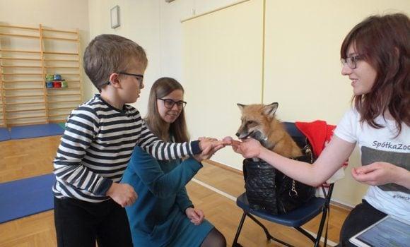 Wizyta lisów